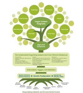 The functional medecine tree